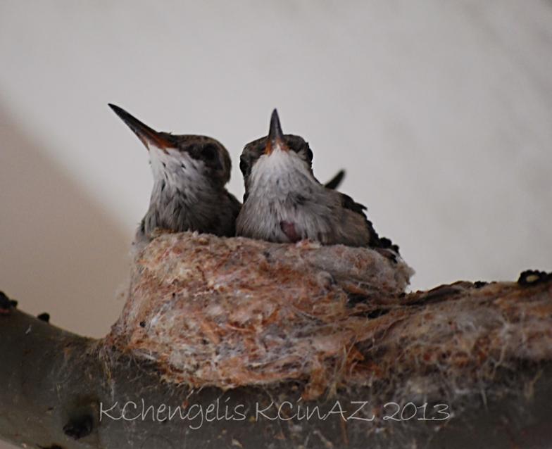 birds_1942B