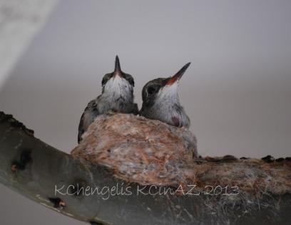 birds_1945B