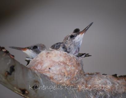 birds_1959B