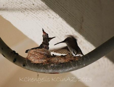 birds_2000