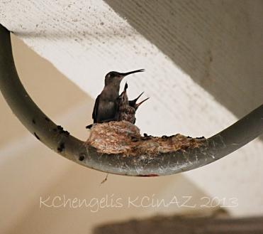 birds_2002