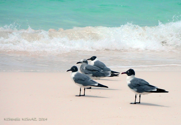 Beach Birds Catching a Few Rays