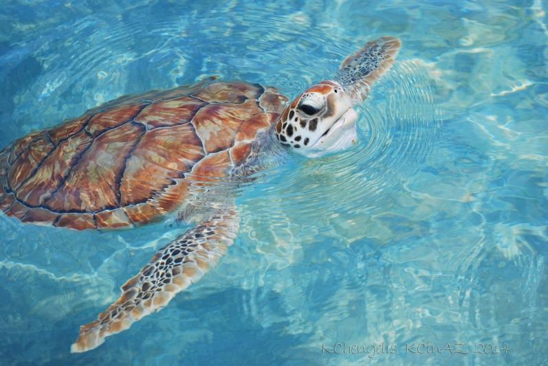 Turtle habitat in Cancun