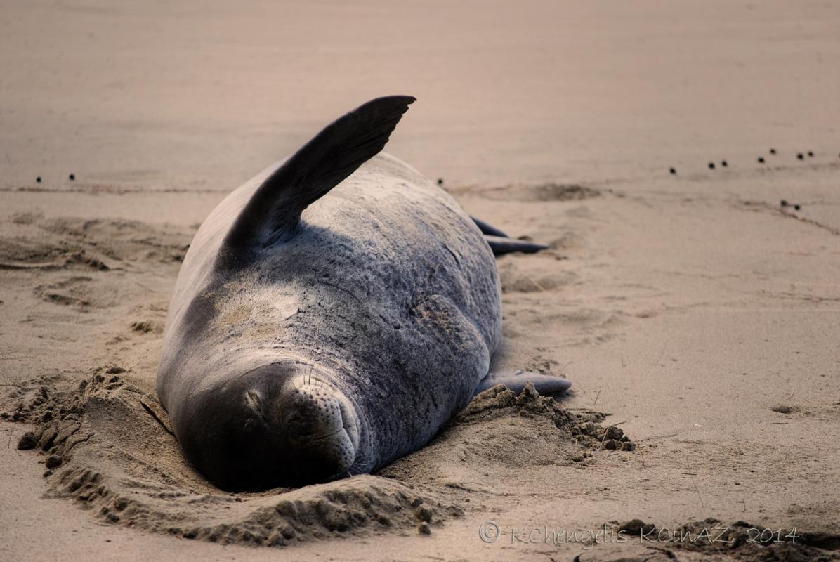 SealWaving